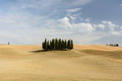 Zypresse-Baumkreis mitten in einem Feld in Val-d& x27; Orcia, Tus Lizenzfreie Stockfotos