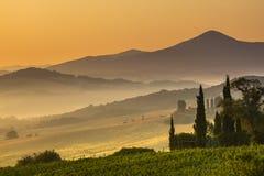 Zypresse in der toskanischen Landschaft, Italien Lizenzfreies Stockfoto