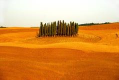 Zypresse-Hügel Stockfotografie