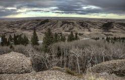 Zypresse-Hügel Alberta Saskatchewan lizenzfreies stockfoto