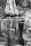Zypresse-Spiegel Lizenzfreies Stockbild