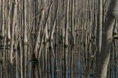 Zypresse-Sumpf Lizenzfreie Stockfotografie