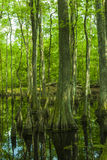 Zypresse-Sumpf, Natchez-Spur, Mitgliedstaat Lizenzfreie Stockfotos