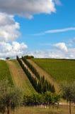 Zypresse-vineyad Trauben und Olive Stockfoto