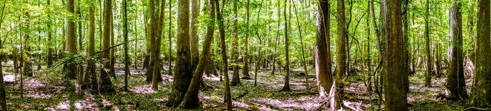 Zypresse-Wald-Sumpf Nationalparks Congaree in Süd-Caro lizenzfreie stockfotografie