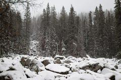 Zyuratkul国家公园,在大母狗上面的攀登在岩石的 库存照片