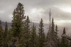 Zyuratkul nationalpark, nära överkanten av den stora Kalagazaen, Ryssland Arkivbilder