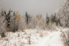 Zyuratkul nationalpark, vägen till och med passerandet stora Suka, sen höst, Ryssland Arkivfoto