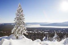 Zyuratkul, paisagem do inverno Abeto vermelho só coberto de neve foto de stock
