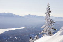 Zyuratkul, winter landscape. Snow covered lonely spruce Stock Image