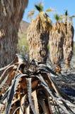 Zzyzx, verlorene Palmen, Mojave-Wüste lizenzfreies stockbild