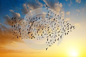 Silhouette of birds flying in arrow formation.