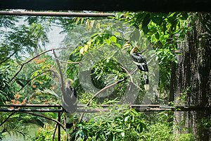 Two hornbills in cage in zoo