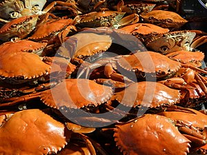 Crabs and other seafood