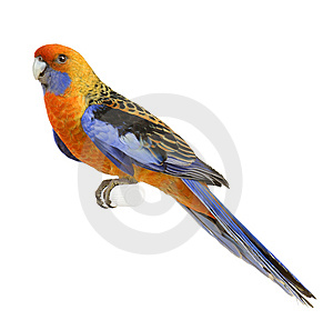 Beautiful coloured parrot