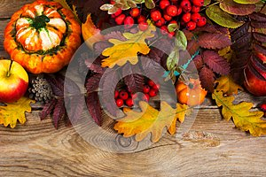 Thanksgiving or fall background with red berries, pumpkins, rowa
