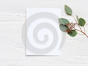 Feminine wedding desktop mock-up with blank paper card and Eucalyptus populus branch on white shabby table background
