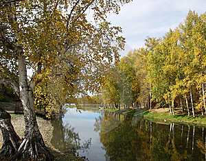 Autumn tree by river