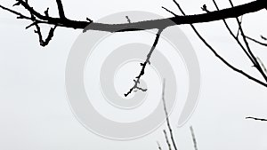 Drop of rain captured on a tree`s branch