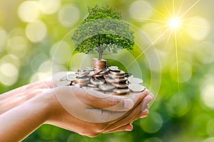 Hand Coin tree The tree grows on the pile. Saving money for the future. Investment Ideas and Business Growth. Green background wit