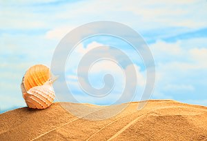 Summertime Seasonal, white yellow seashell on the sandy beach with sunny colorful blue sky background and copy space.