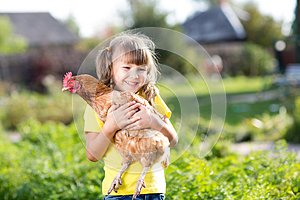 Child with hen in hands in rural