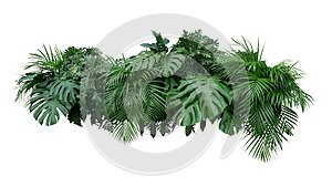 Tropical leaves foliage plant bush floral arrangement nature backdrop isolated on white background, clipping path included.
