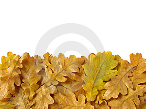 Oak leaves border