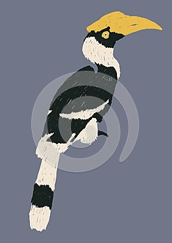 Isolated hornbills bird illustration