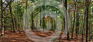 Beech trees forest/woodland with gravel road at autumn afternoon daylight