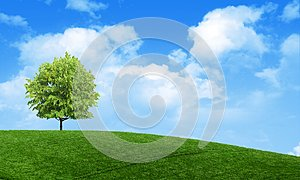 Green summer landscape scenic view wallpaper. Solitary tree on grassy hill and blue sky with clouds. Lonely tree springtime.