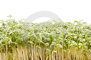 Cress leaves