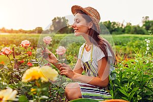 Senior woman gathering flowers in garden. Middle-aged woman smelling and admiring roses. Gardening concept
