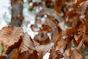 Autumn Leaves in a Bokeh Forest Landscape