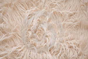 Off White Or Cream Colored Furry Background Cover Photo 15982239