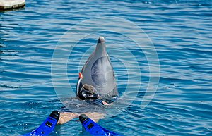 Dolphin and undefined girl in Red Sea water