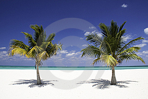 Tropical Serenity - Twin Palm Trees