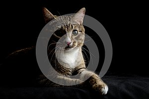 Gray and brown tabby cat