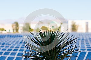 Close up. Yucca palm. Blurred solar power electric generating system and facility in background