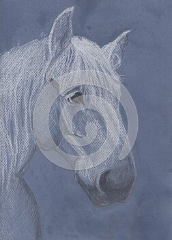 Portrait of a grey horse of the Percheron breed