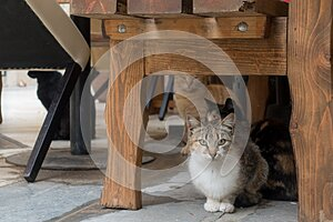 Cats on the streets of Pula