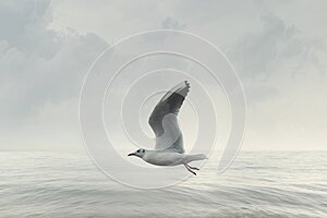 Seagull flies free in the sky over the ocean