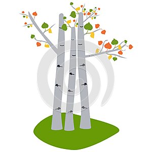 Aspen trees. Tree illustration, Autumn tree