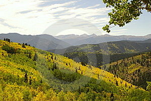 Forested mountain range