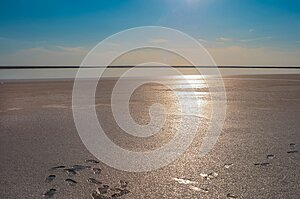 Human footprints on the shore of a salt lake.