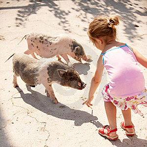 Small girl feeds little pigs