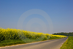 Road near a canola field