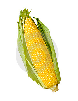 Ear of Corn isolated