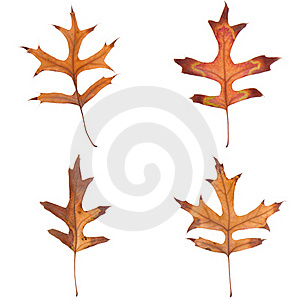 Four fall leaves