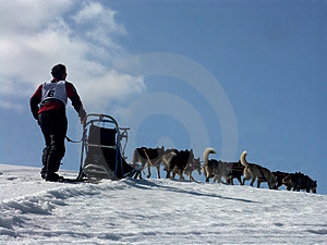 Musher in aktion